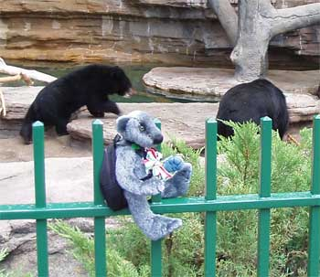 Wilbeary and Moon bears