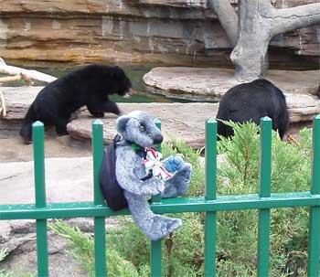 Wilbeary and Moon bears