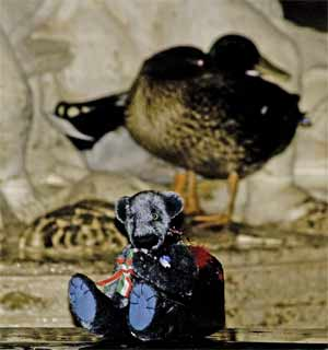 Wilbeary play with the ducks