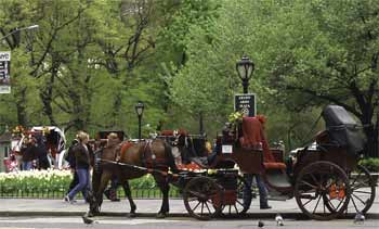 Horse drawn carriage in Central Park